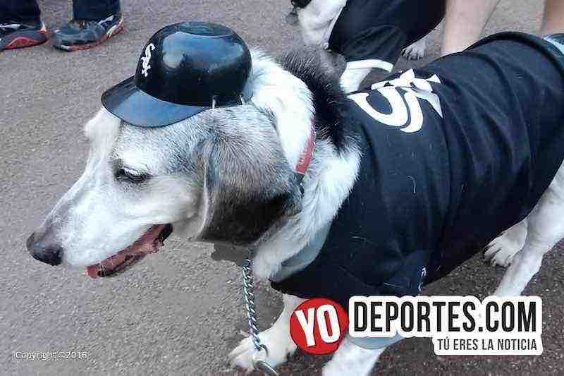 Récord Guinness de perros en los White Sox