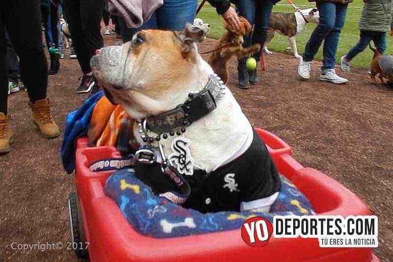 White Sox Dog Day 2017