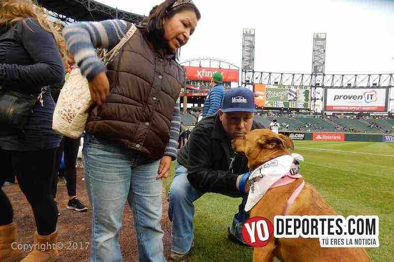 White Sox Dog Day-mateo moreno-medias blancas