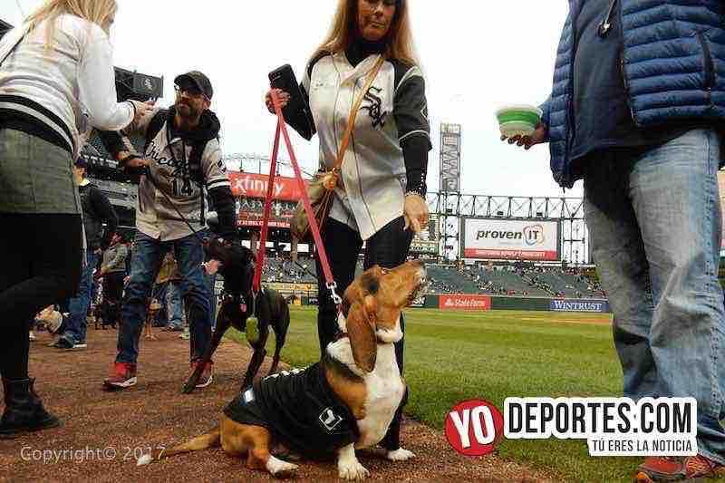 dia del perro-medias blancas-White Sox Dog Day