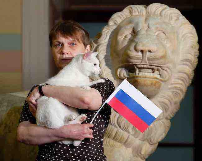El gato oráculo de Rusia 2018 predice la victoria de Nigeria sobre Argentina